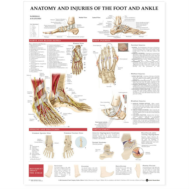 anatomy and injuries of the foot and ankle chart medwest. Black Bedroom Furniture Sets. Home Design Ideas